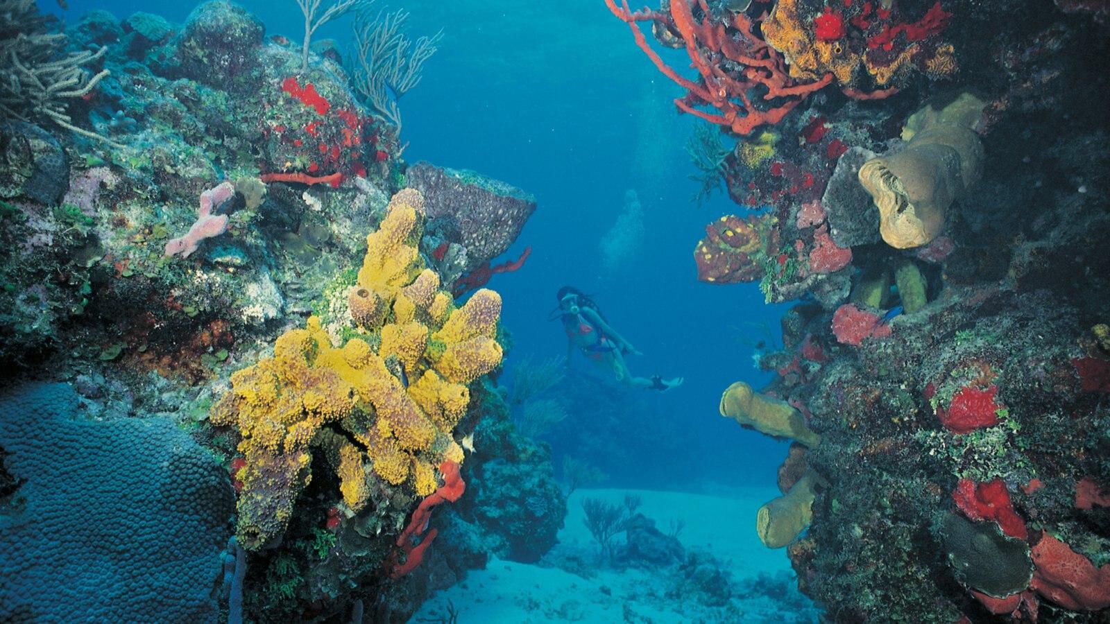 Isla Mujeres que incluye arrecifes coloridos y zambullida y también una mujer