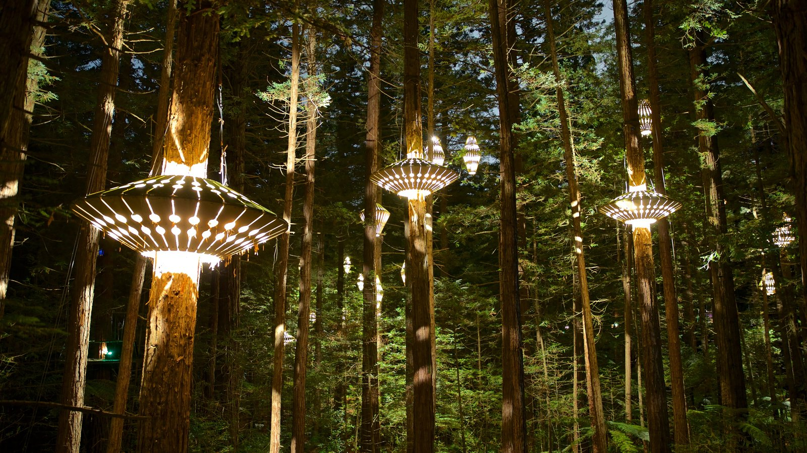 Redwoods Whakarewarewa Forest which includes night scenes and forests