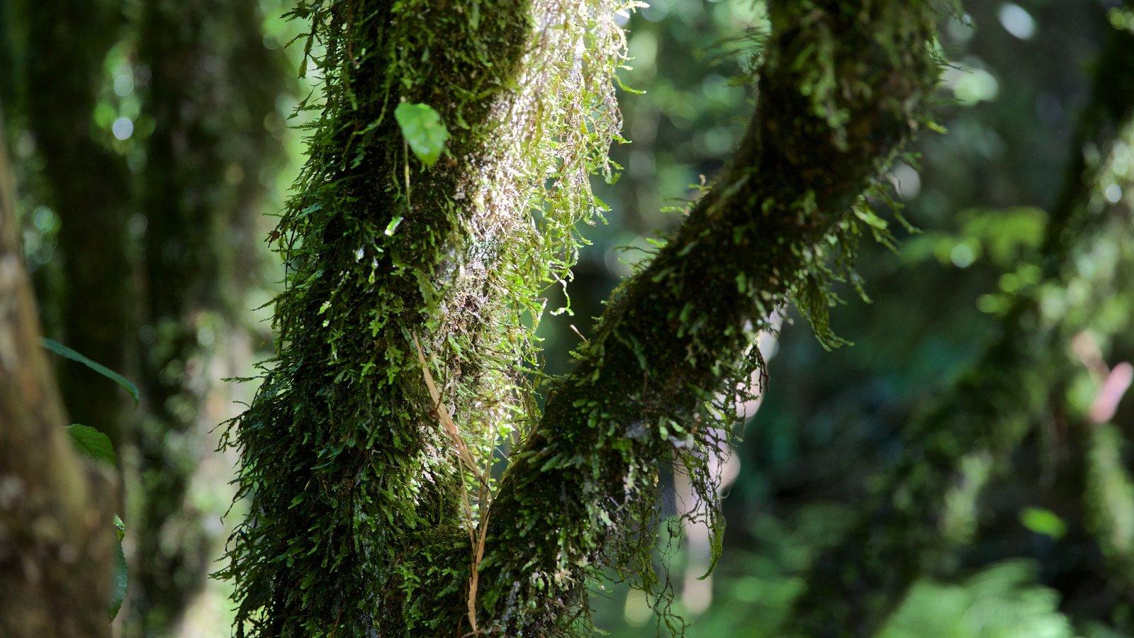 Waitomo Glowworm Caves mostrando cenas de floresta