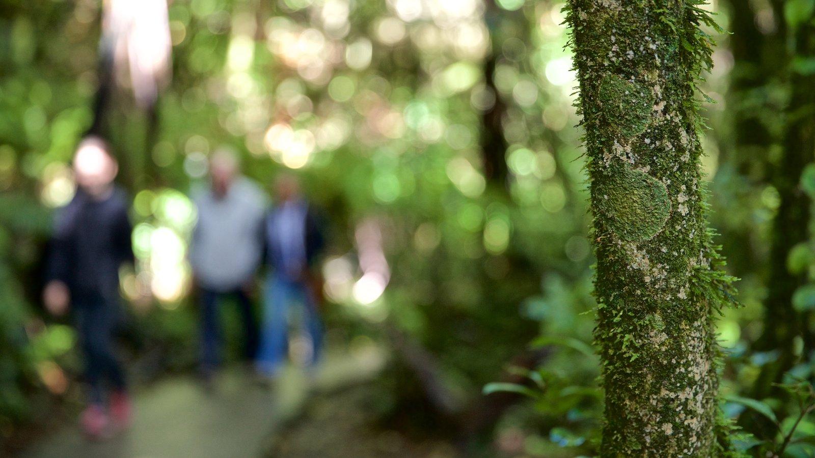 Waitomo Glowworm Caves caracterizando cenas de floresta