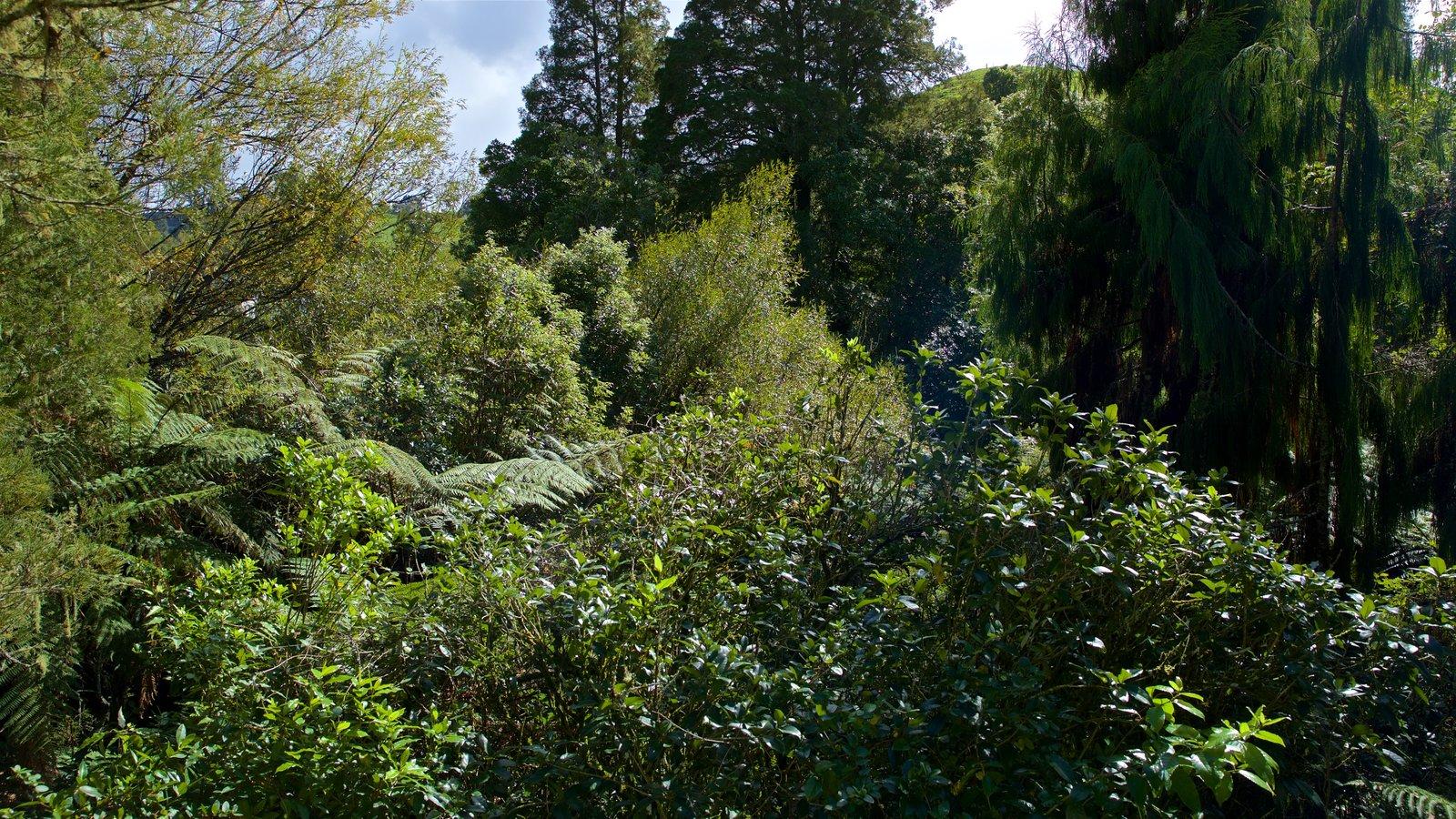 Waitomo Glowworm Caves mostrando florestas