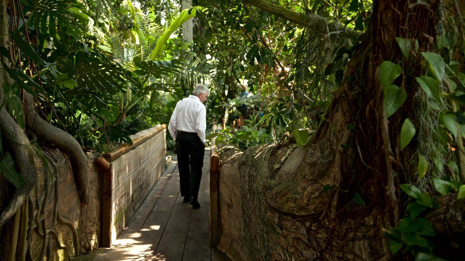United States Botanic Garden mostrando um parque assim como um homem sozinho