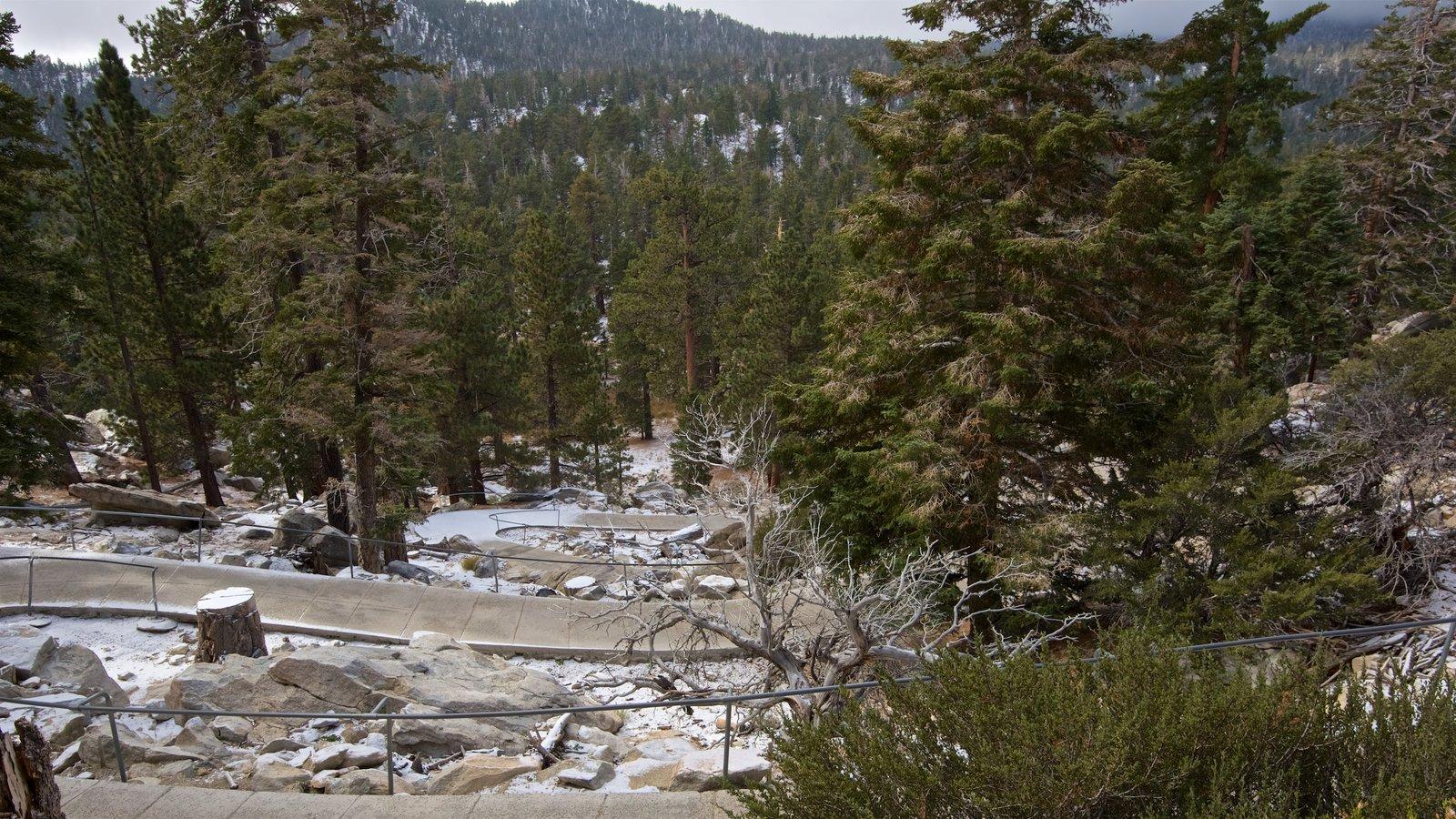Parque estatal Mount San Jacinto que incluye bosques y escenas tranquilas