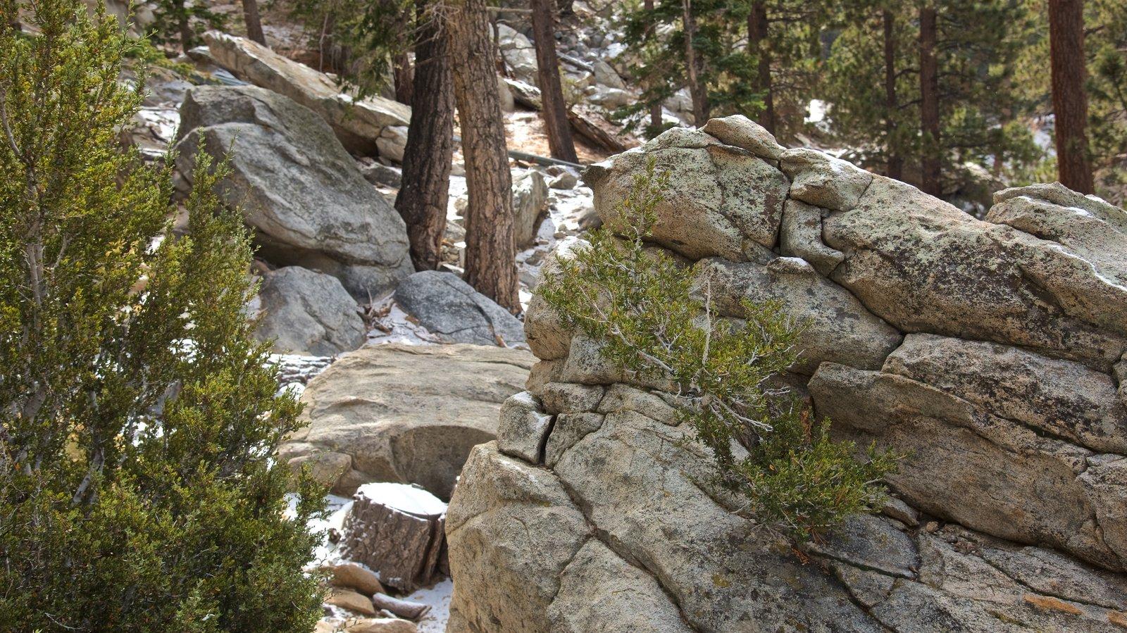 Parque estatal Mount San Jacinto mostrando escenas tranquilas y escenas forestales