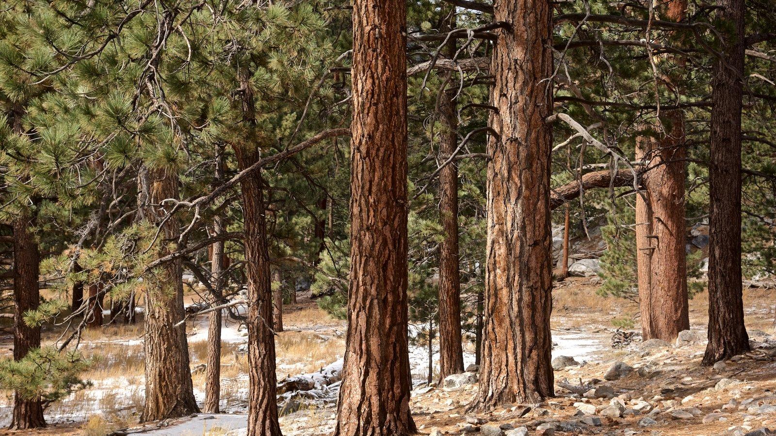 Parque estatal Mount San Jacinto que incluye bosques