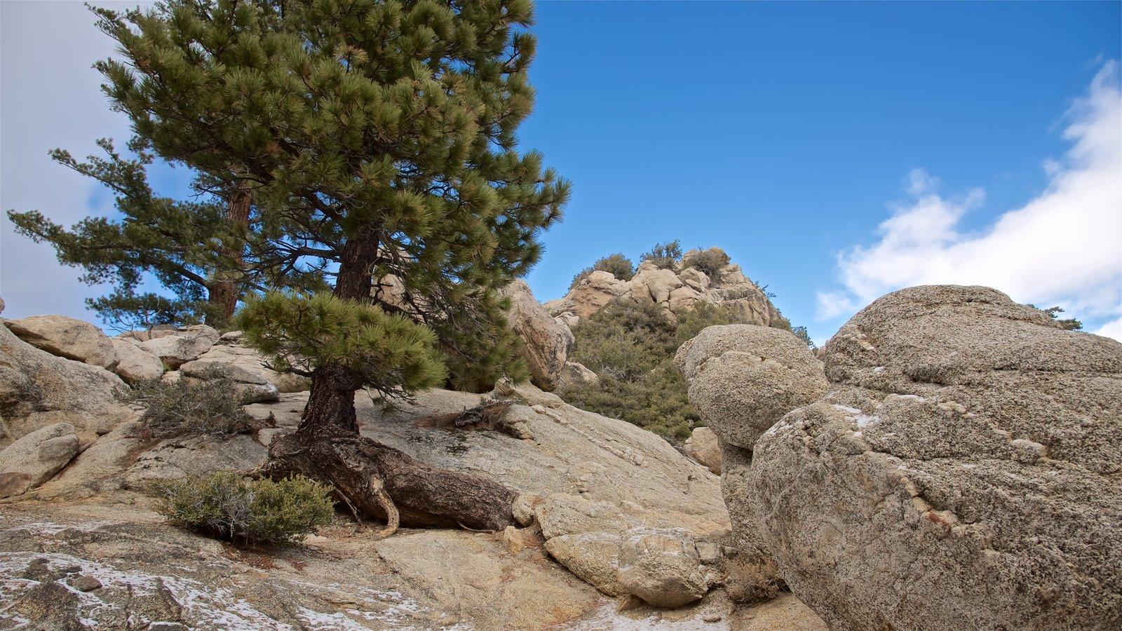 Parque estatal Mount San Jacinto ofreciendo escenas tranquilas