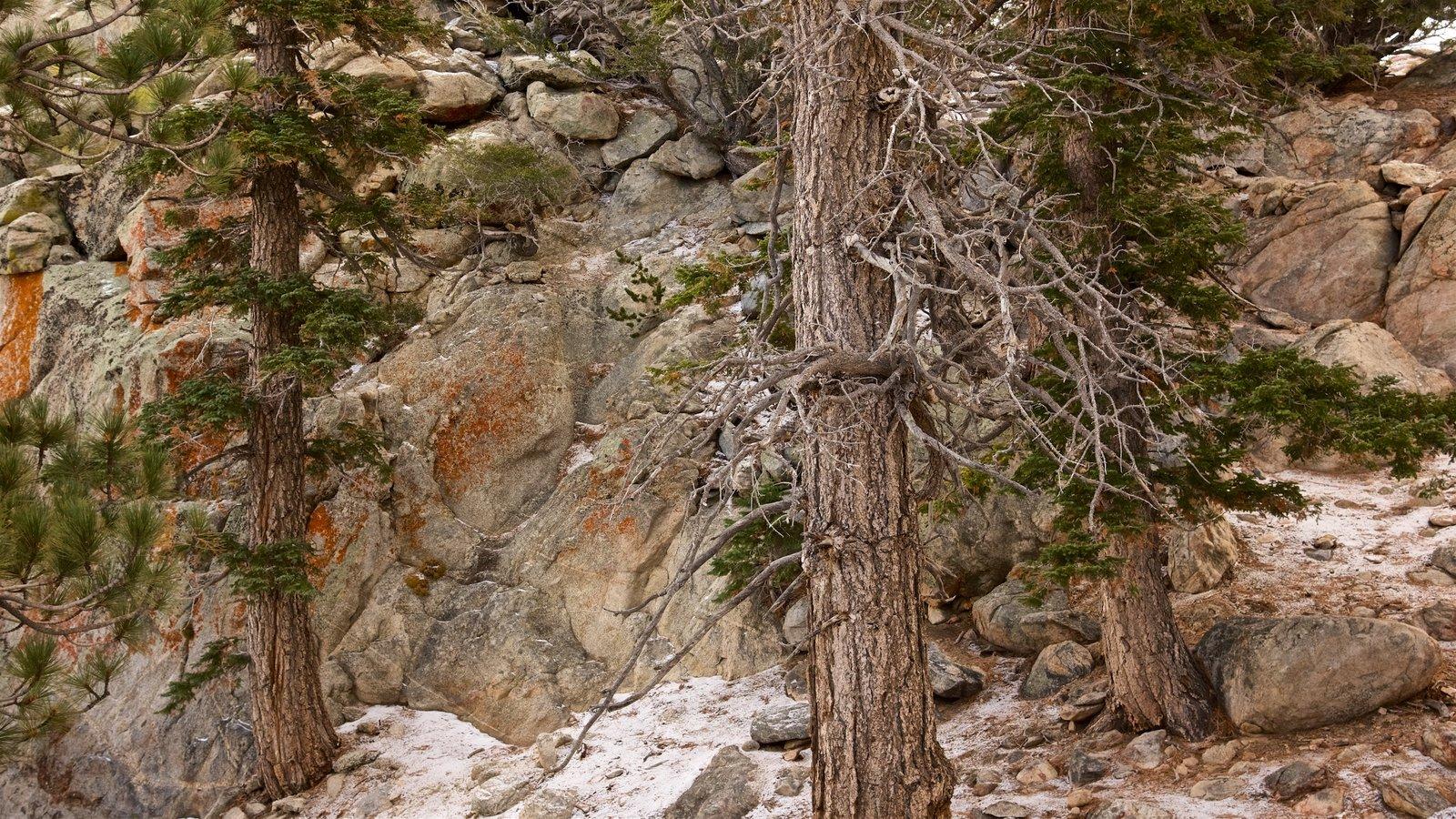 Parque estatal Mount San Jacinto que incluye montañas