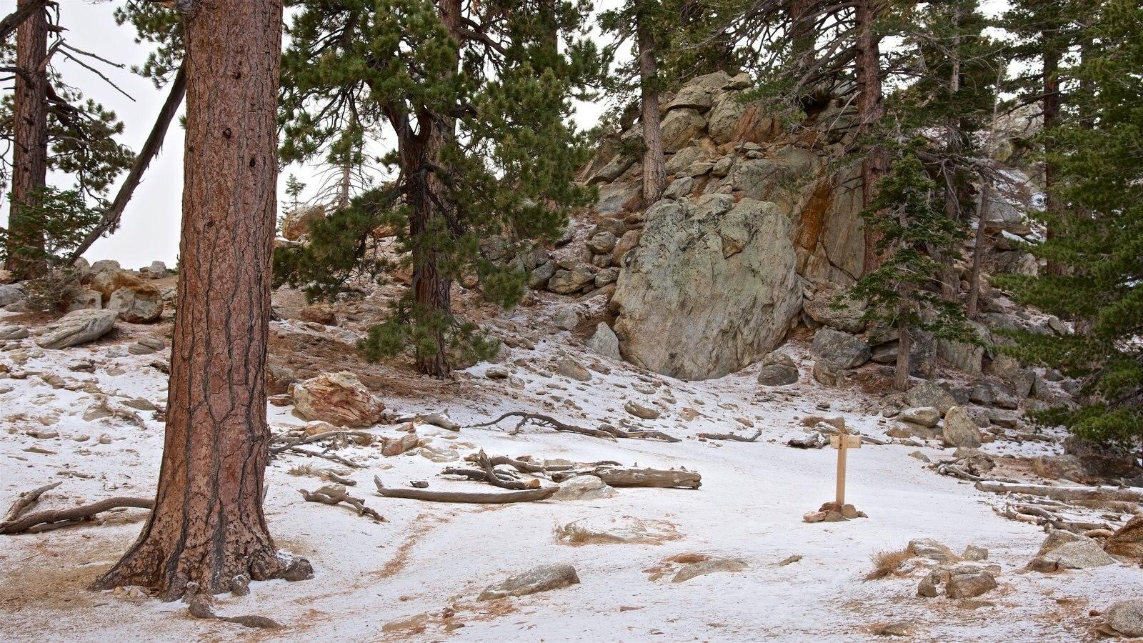 Parque estatal Mount San Jacinto que incluye bosques y nieve