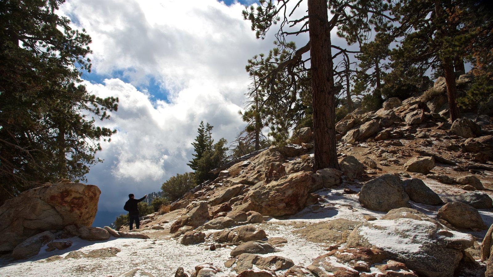 Parque estatal Mount San Jacinto mostrando escenas tranquilas y montañas y también un hombre
