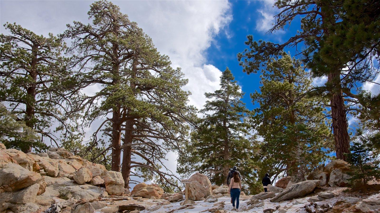 Parque estatal Mount San Jacinto mostrando escenas tranquilas y senderismo o caminata y también una pareja