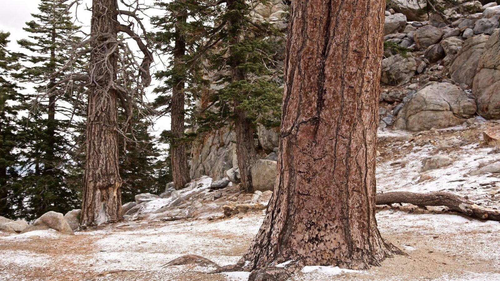 Parque estatal Mount San Jacinto que incluye escenas forestales y escenas tranquilas