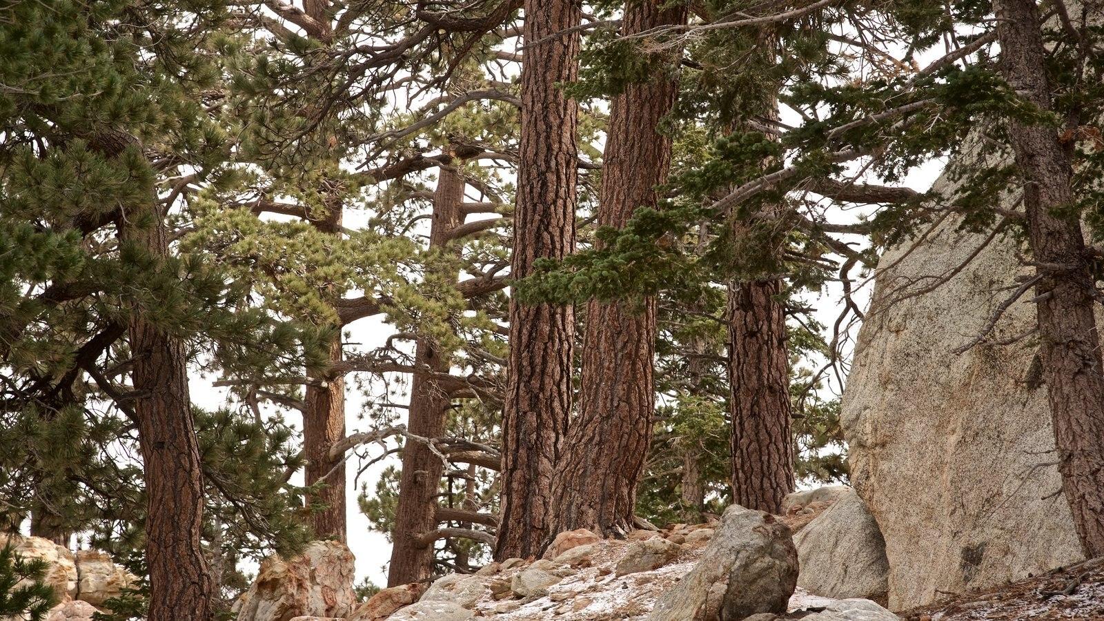 Parque estatal Mount San Jacinto ofreciendo escenas tranquilas y escenas forestales