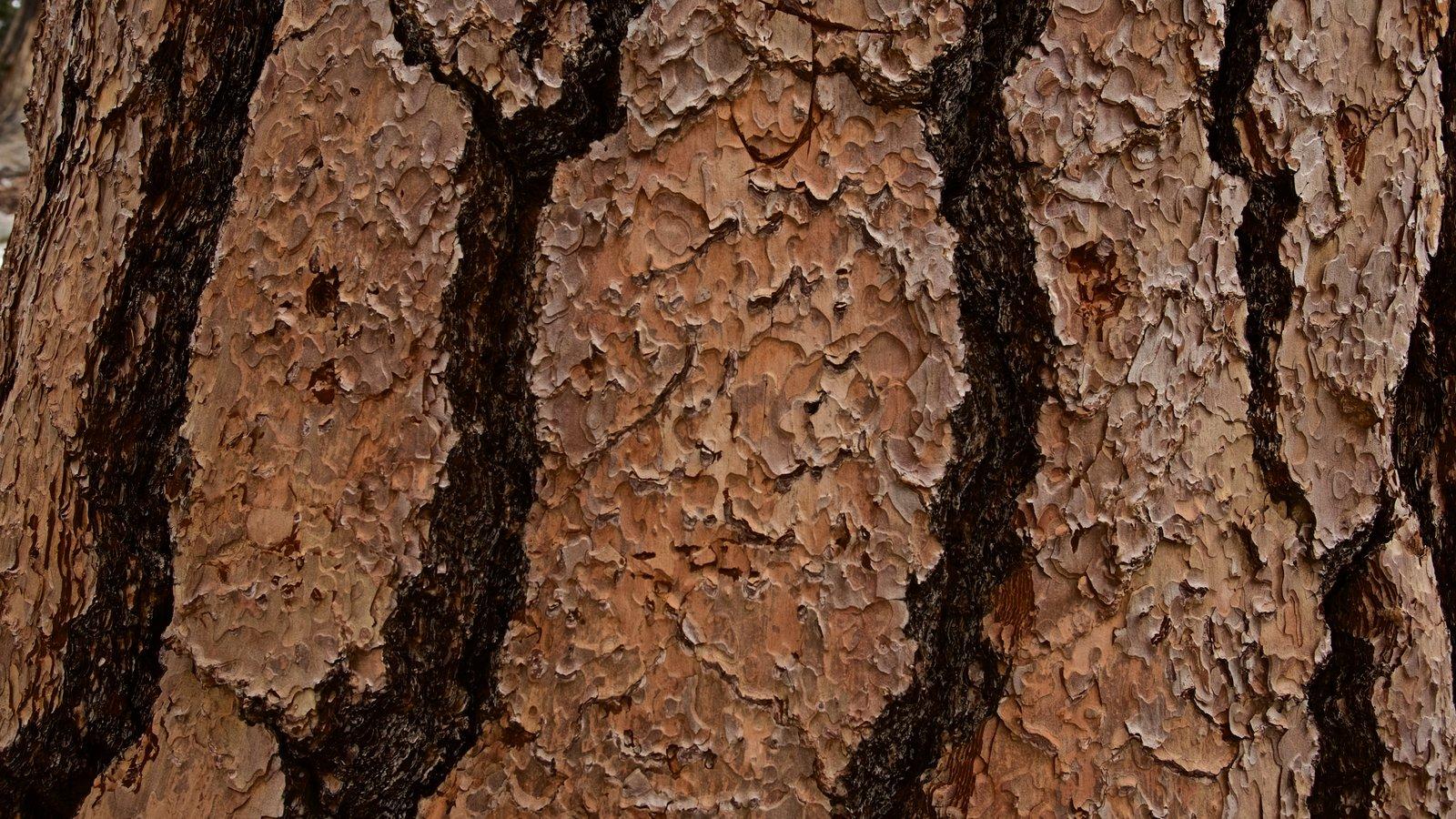 Parque estatal Mount San Jacinto que incluye escenas forestales