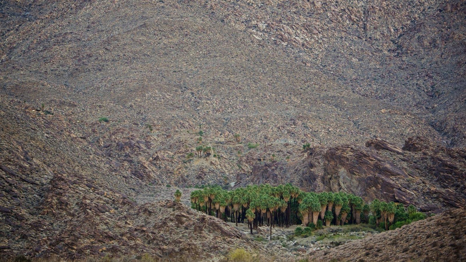 Cañones Indios que incluye vistas al desierto y vistas de paisajes