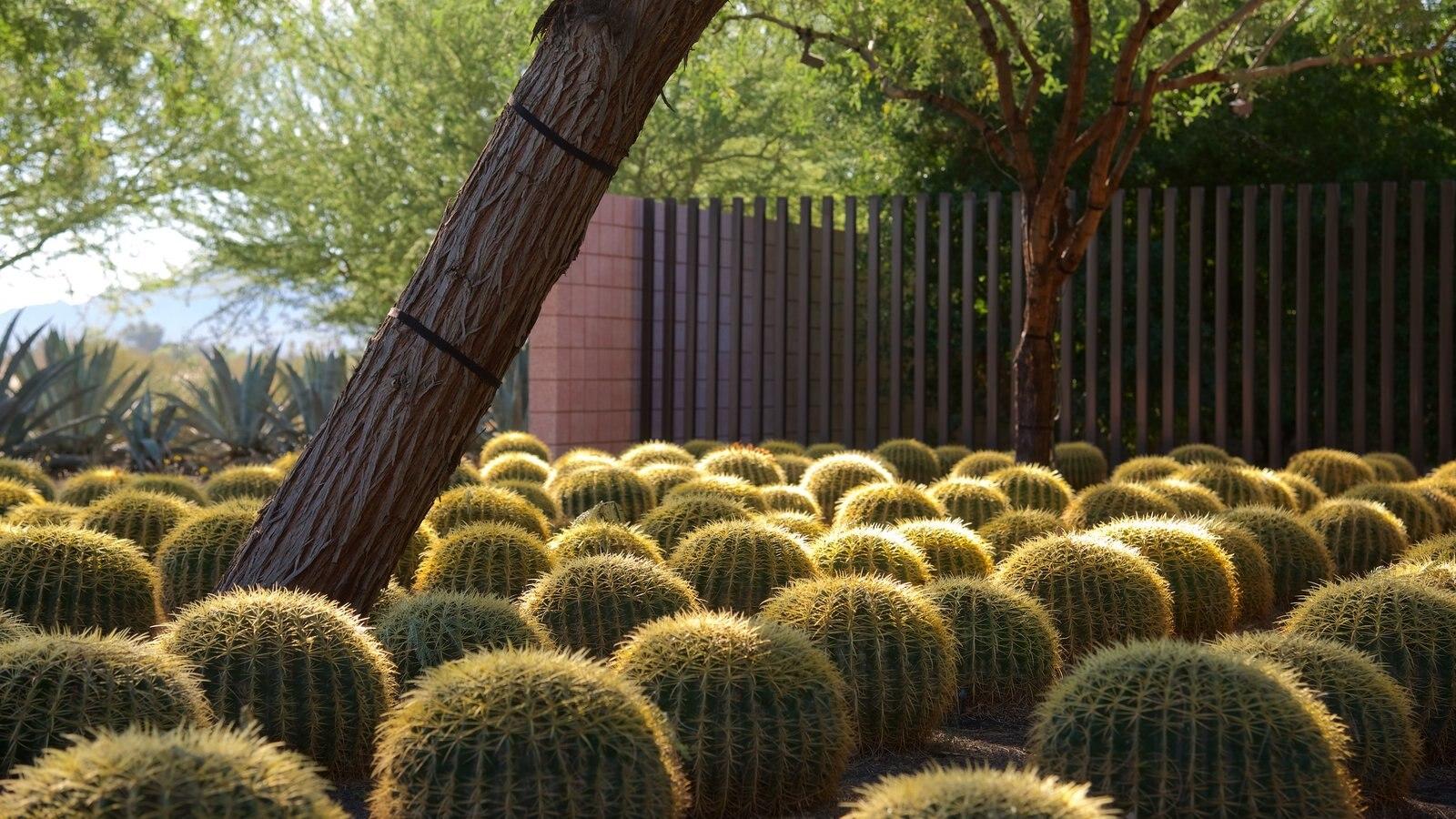 Centro Sunnylands y jardines que incluye un parque