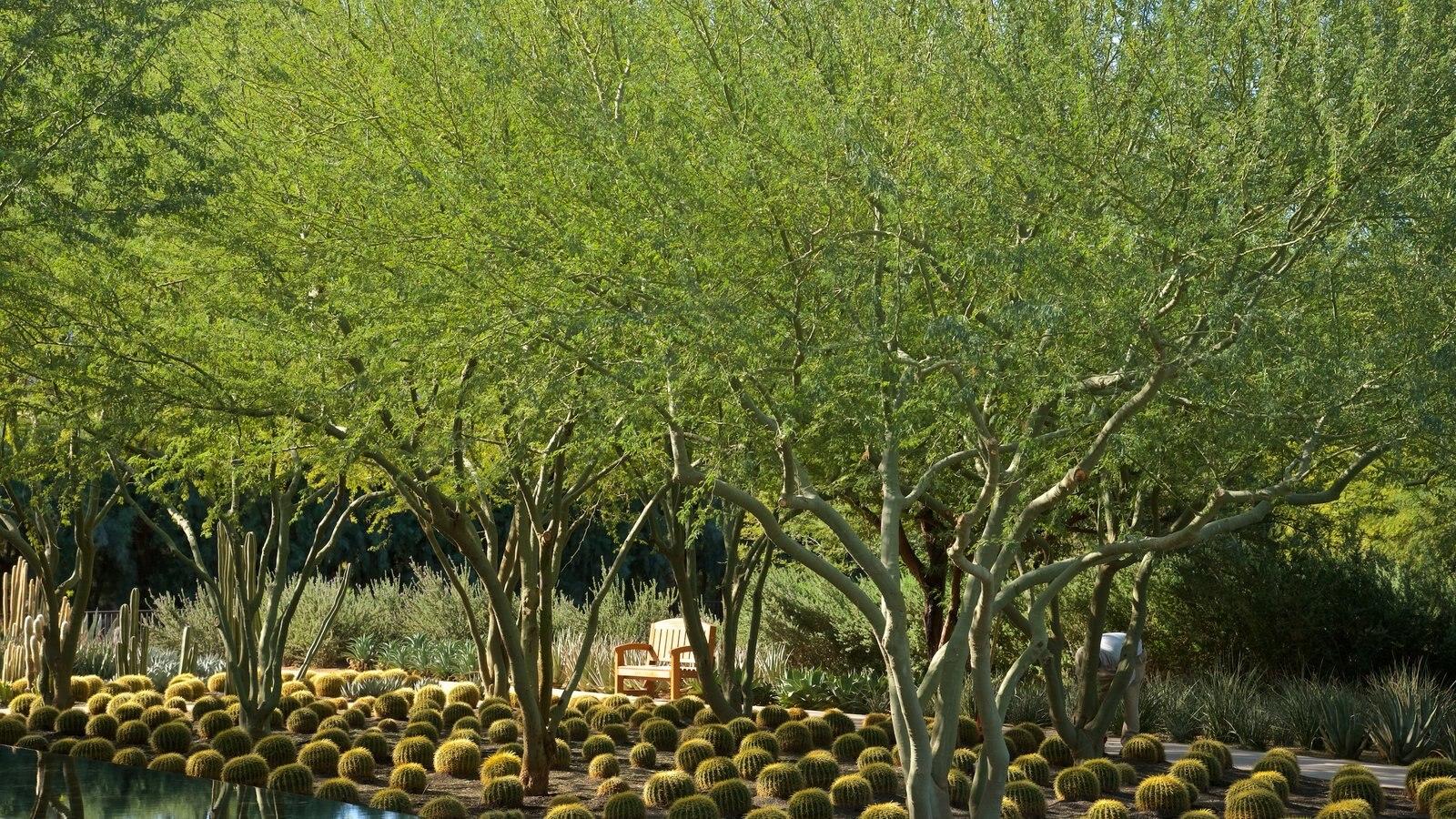Centro Sunnylands y jardines mostrando un jardín
