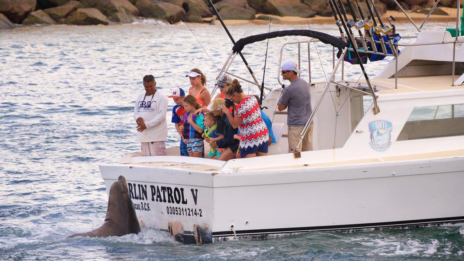 San Lucas Bay featuring marine life, boating and general coastal views