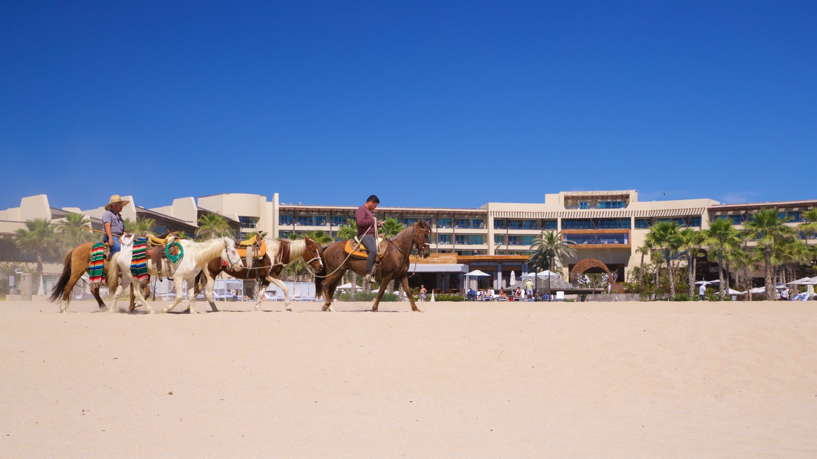 Playa Hotelera which includes a sandy beach, land animals and general coastal views