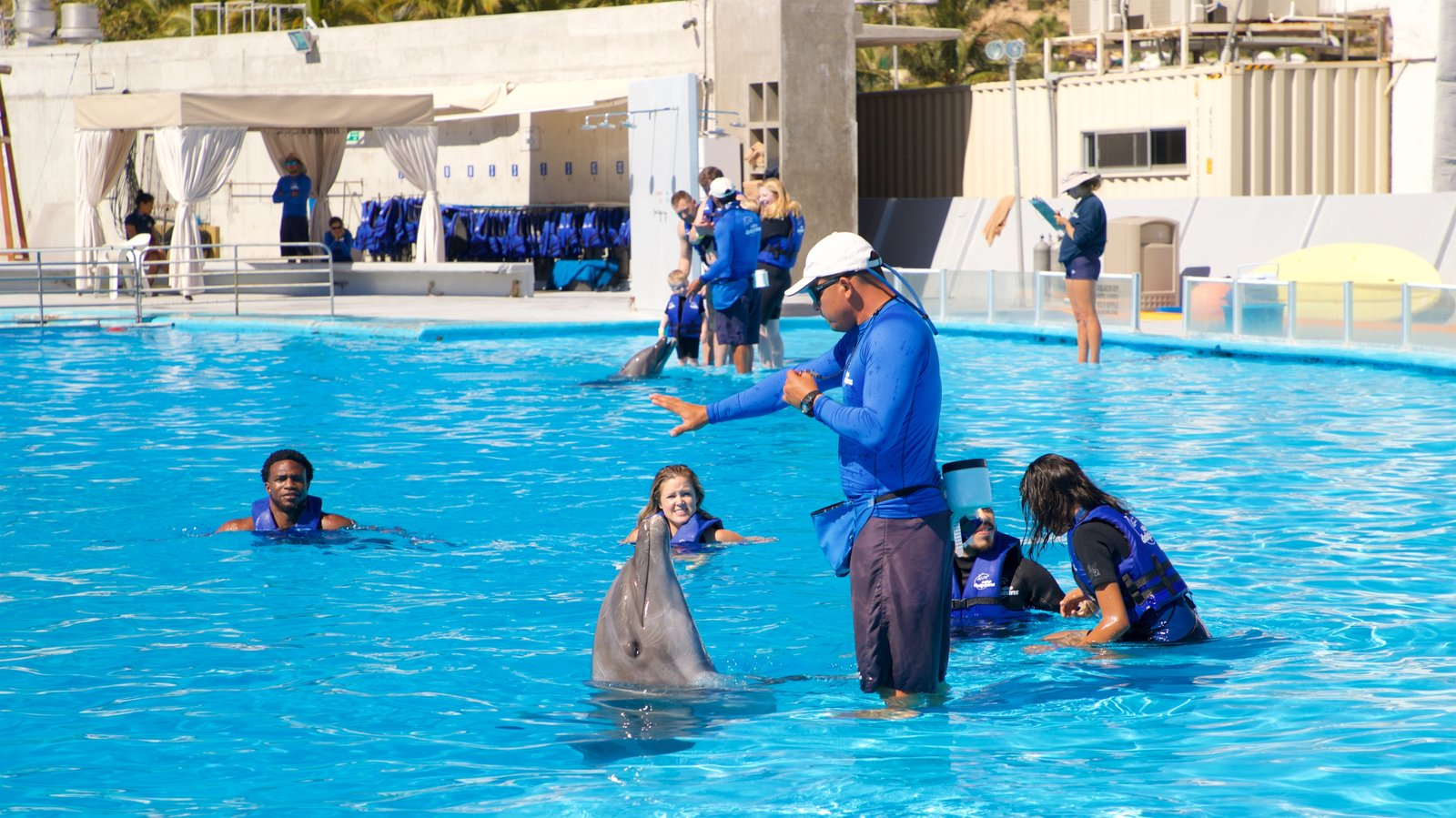 Cabo Dolphins showing a pool and marine life as well as a small group of people