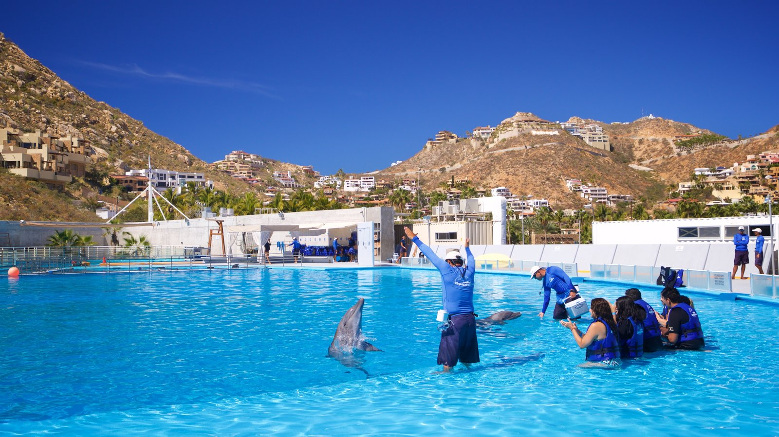 Cabo Dolphins featuring marine life and a pool as well as a small group of people