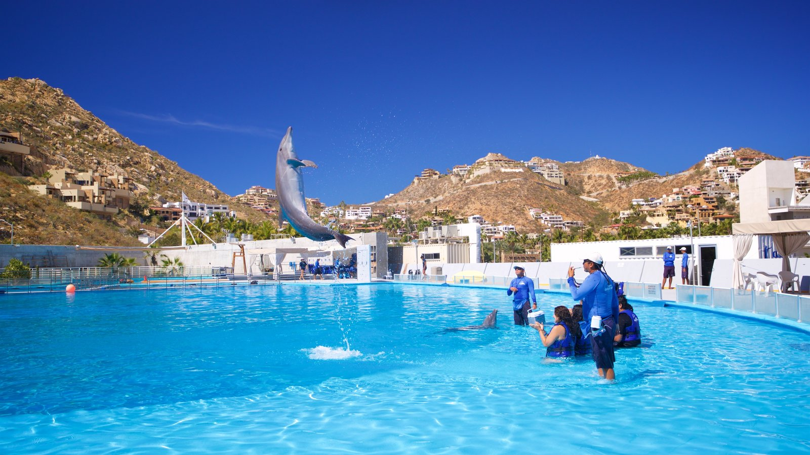 Cabo Dolphins featuring a pool and marine life as well as a small group of people
