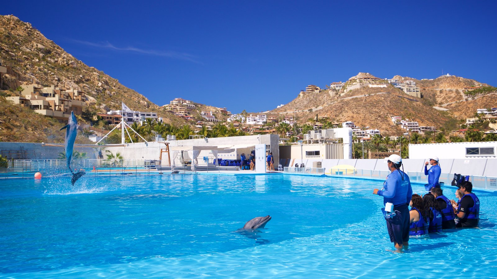Cabo Dolphins which includes marine life and a pool as well as a small group of people