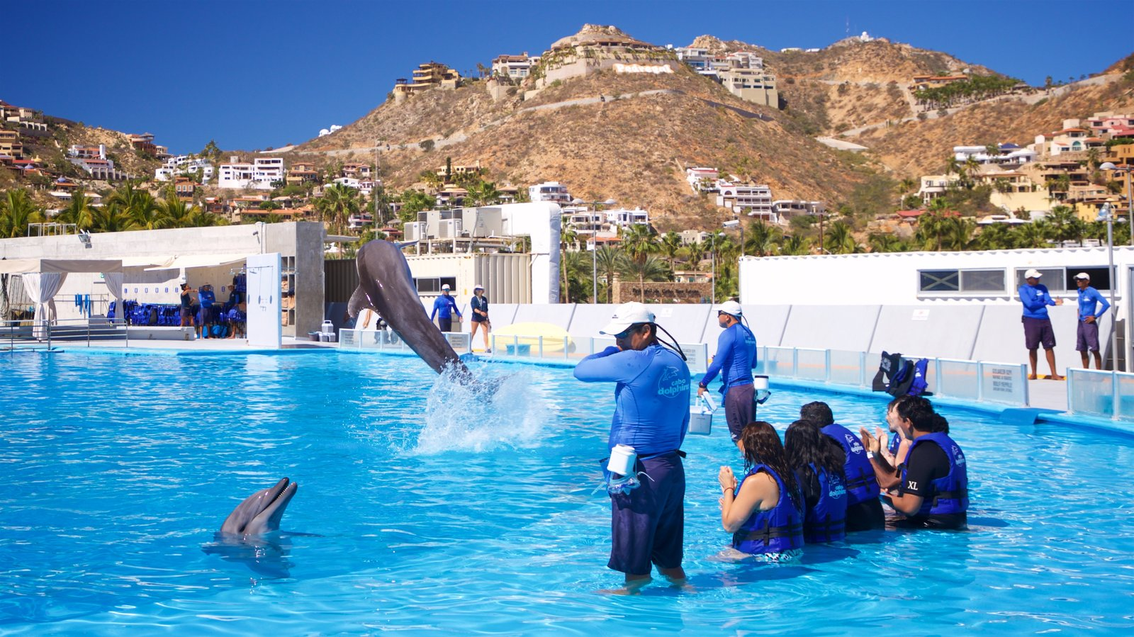 Cabo Dolphins which includes a pool and marine life as well as a small group of people