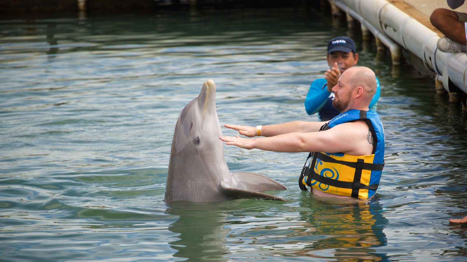 Dolphin Discovery Puerto Los Cabos featuring marine life and swimming as well as an individual male