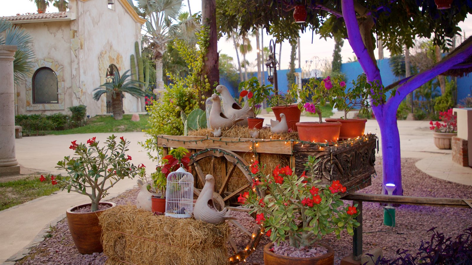 San Jose del Cabo Art District which includes flowers and a garden