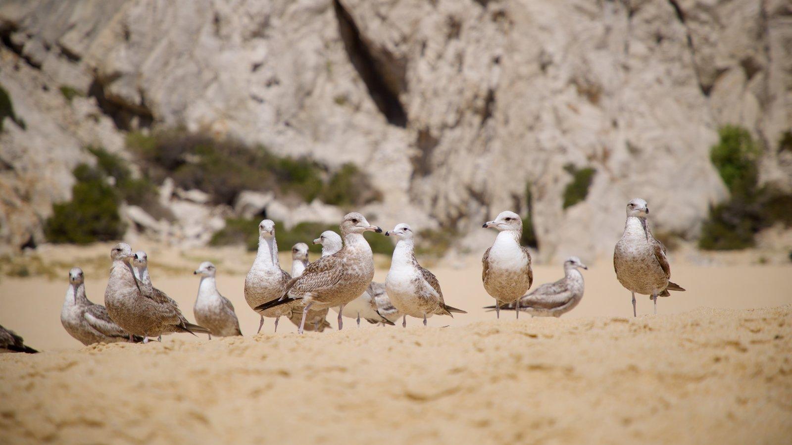 Playa Divorce ofreciendo una playa y vida de las aves