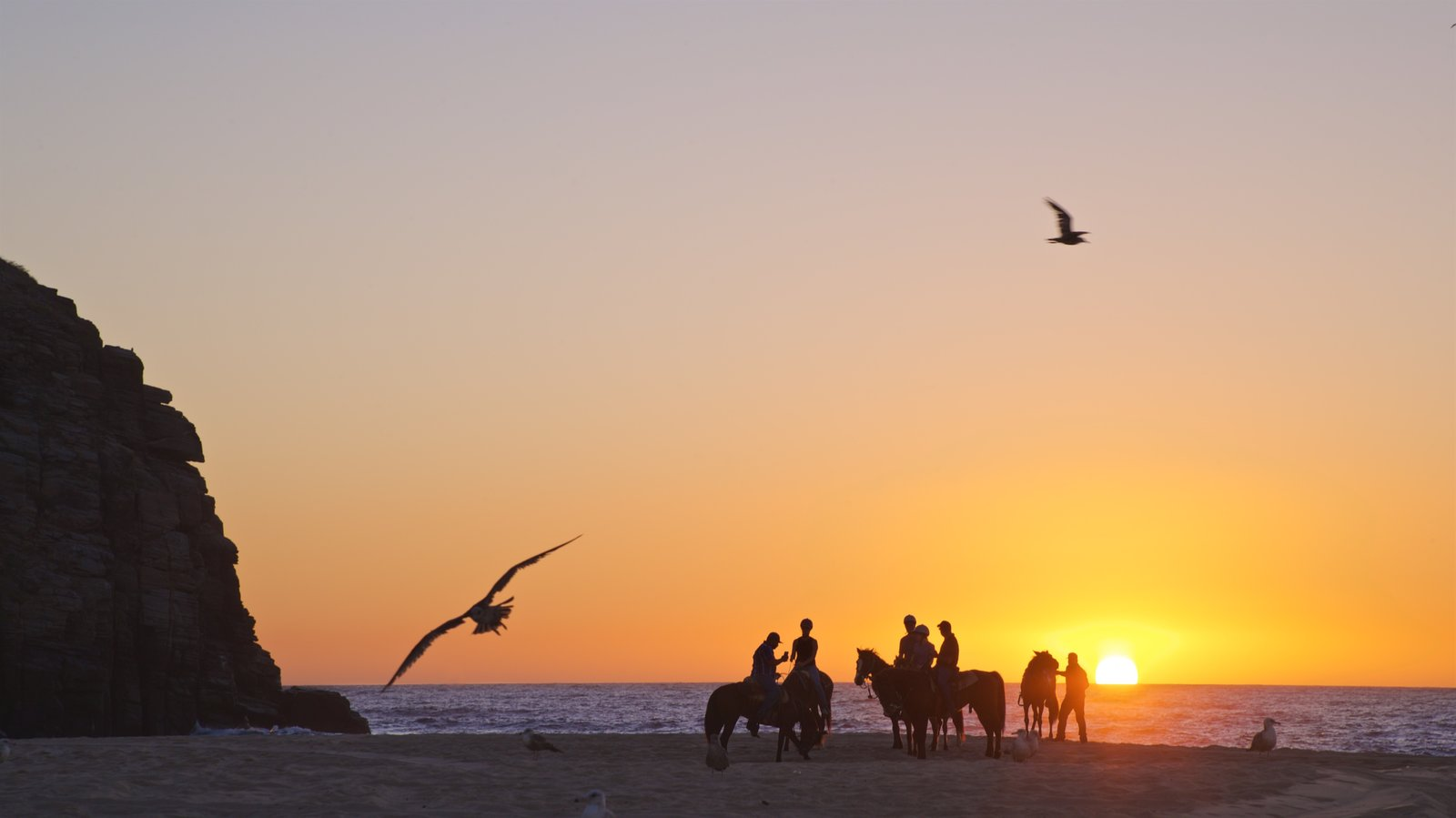Punta Lobos which includes a sunset, landscape views and horseriding