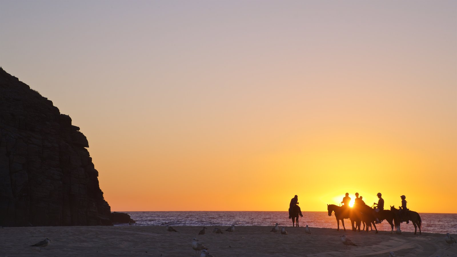 Punta Lobos showing land animals, a sunset and horse riding
