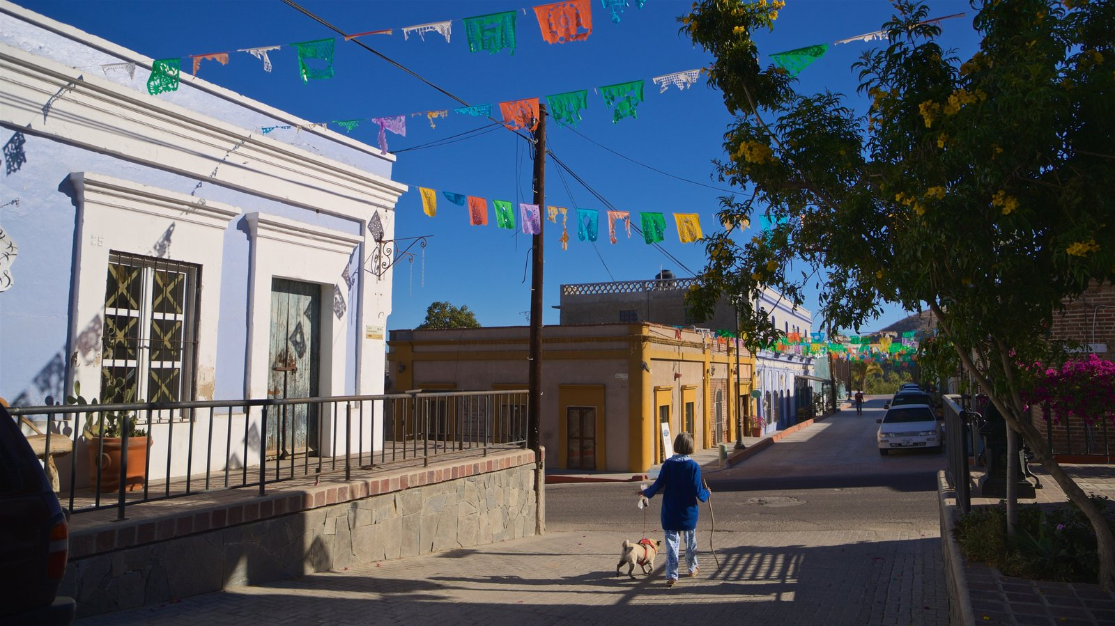 Todos Santos showing cuddly or friendly animals as well as an individual femail
