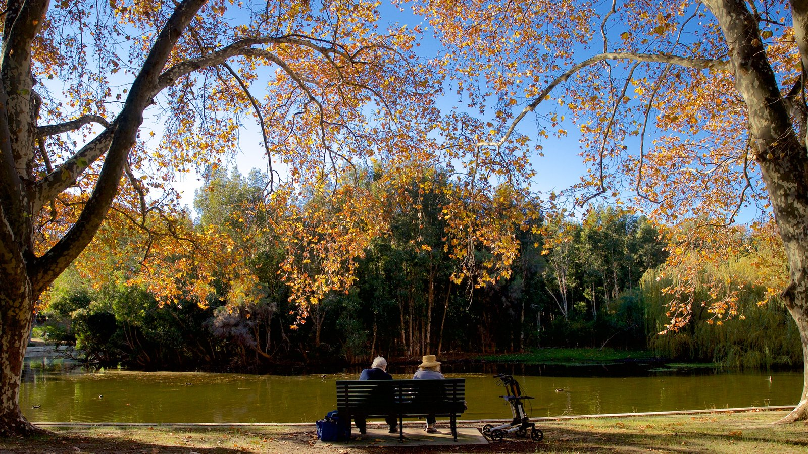 Hyde Park showing a park, fall colors and a lake or waterhole