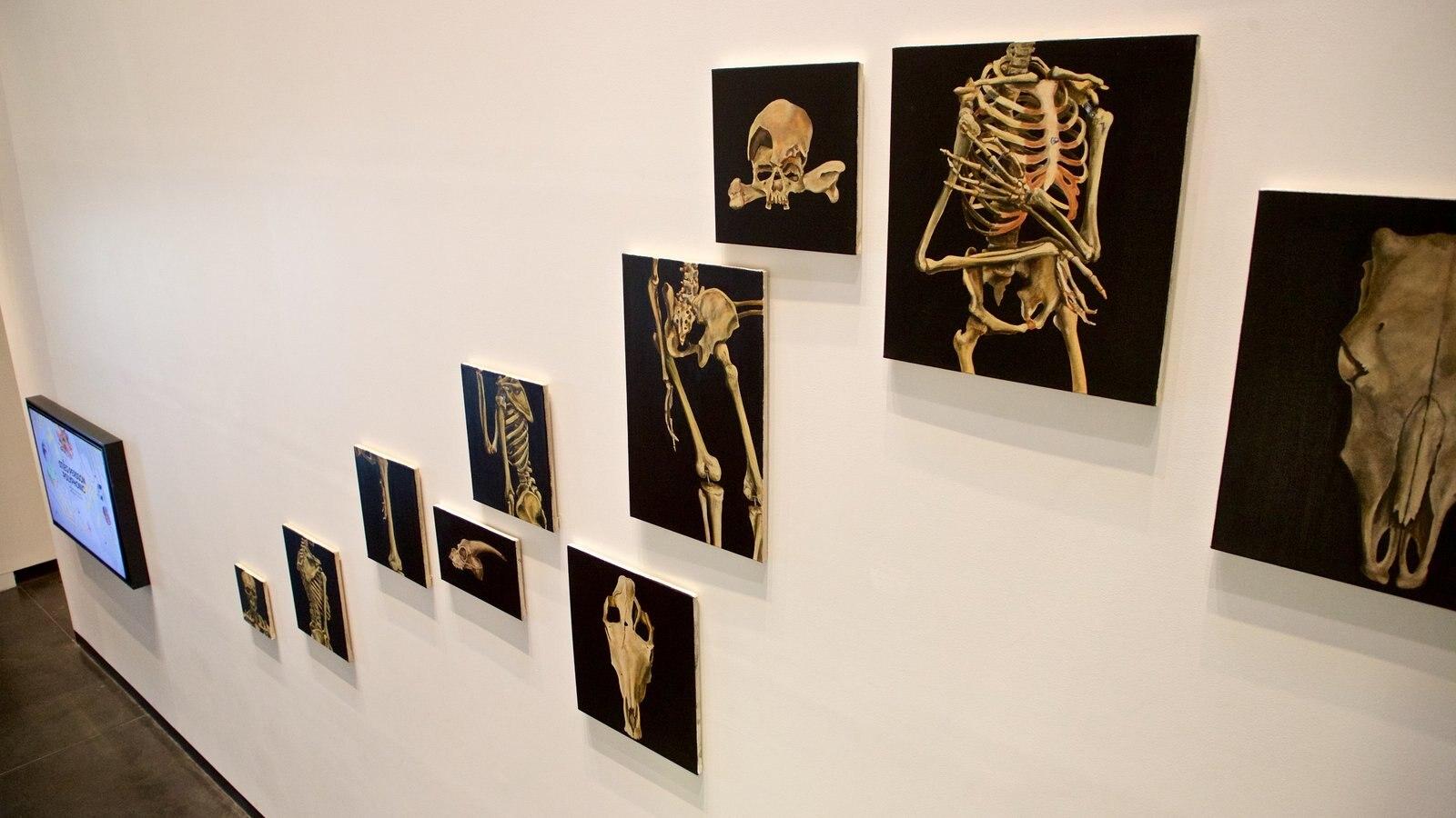 Museo de arte Ian Potter mostrando arte y vistas interiores