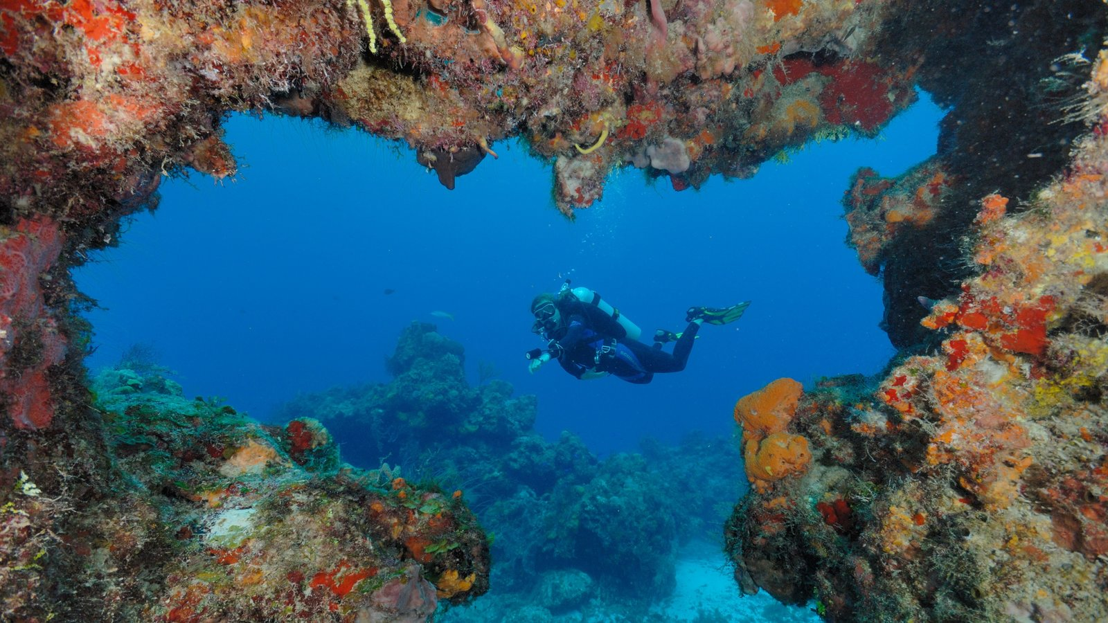 Cozumel featuring scuba diving and coral as well as an individual male