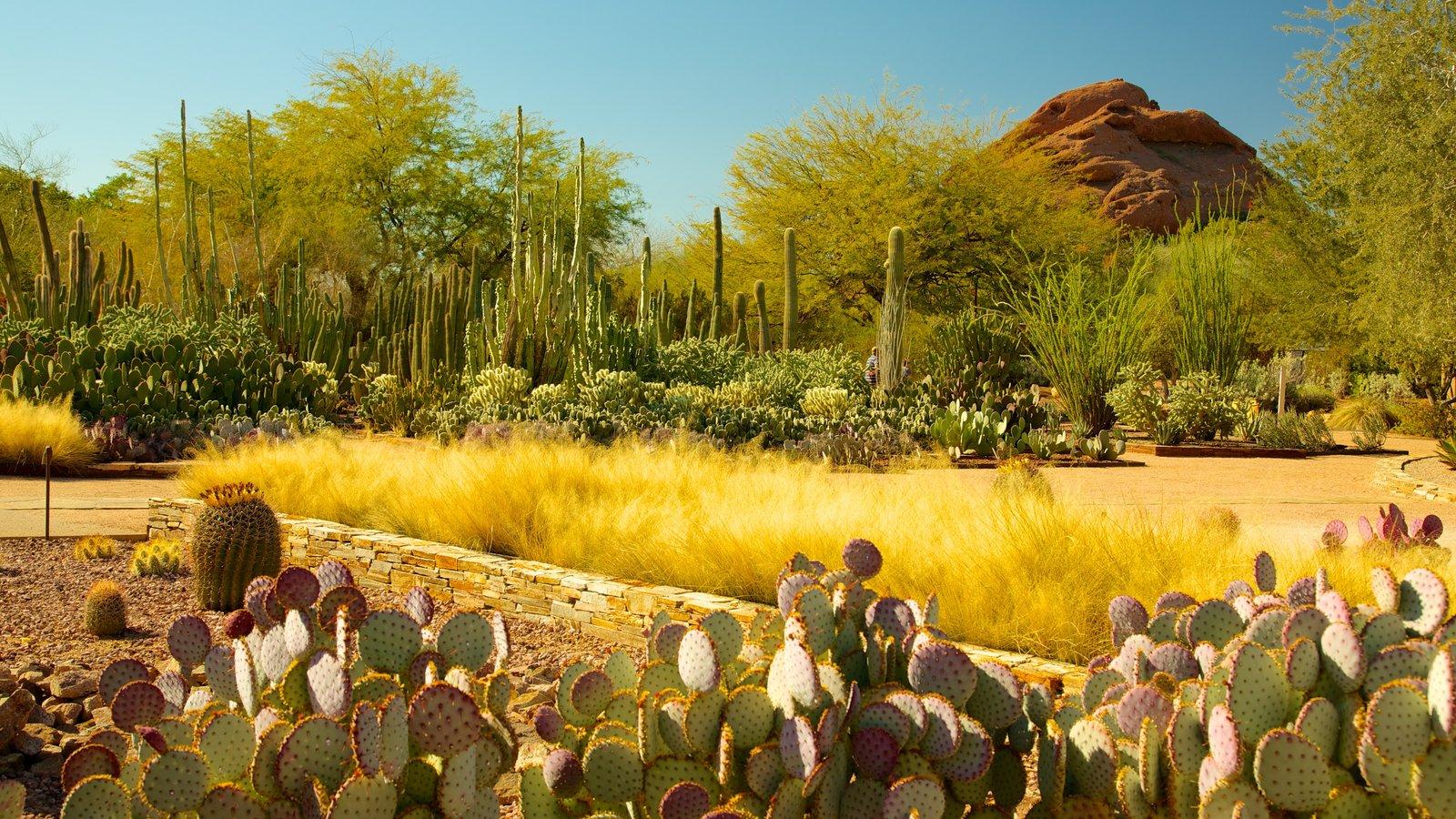 Desert Botanical Garden featuring desert views