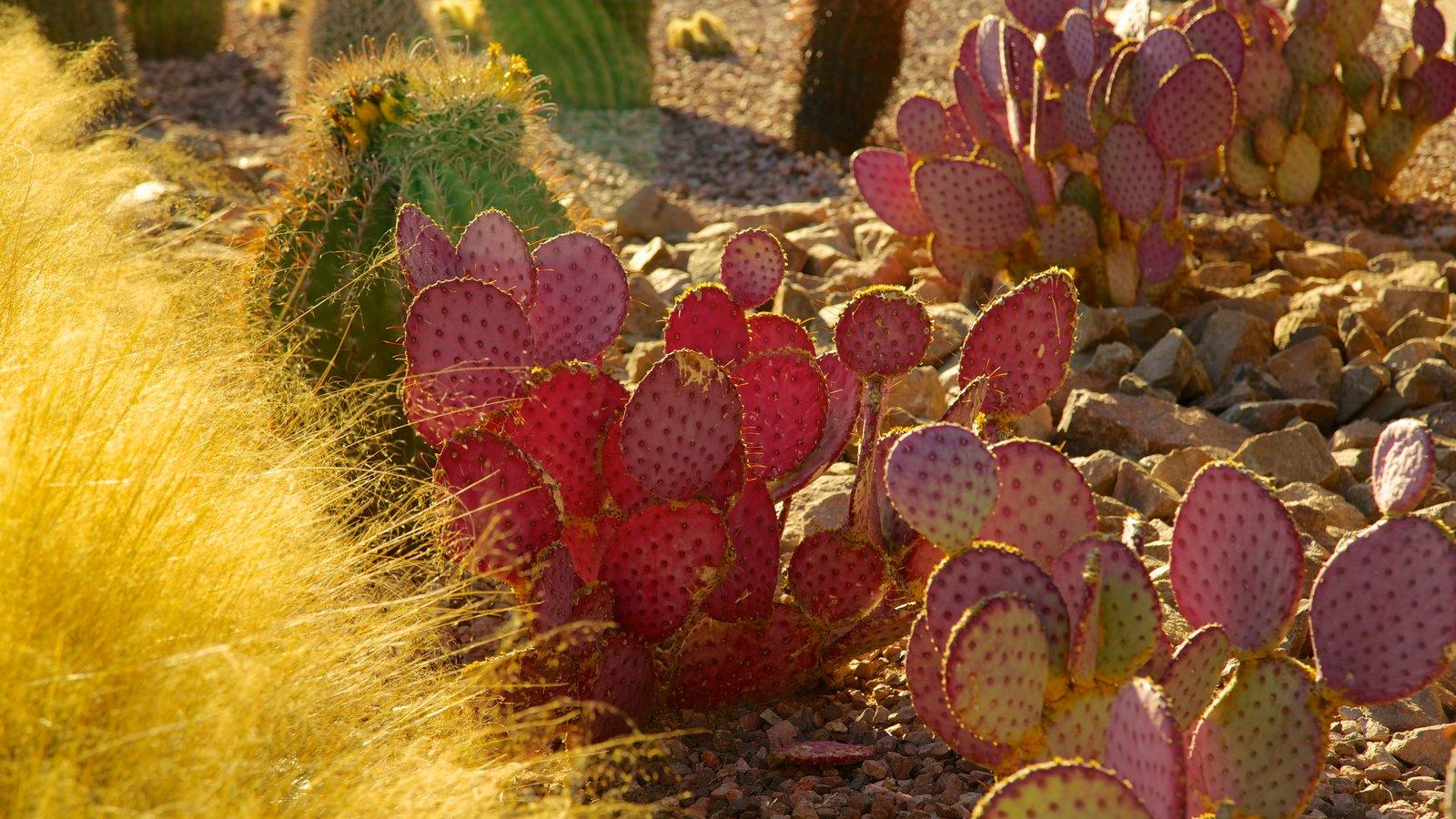 Desert Botanical Garden que inclui um parque, paisagens do deserto e flores