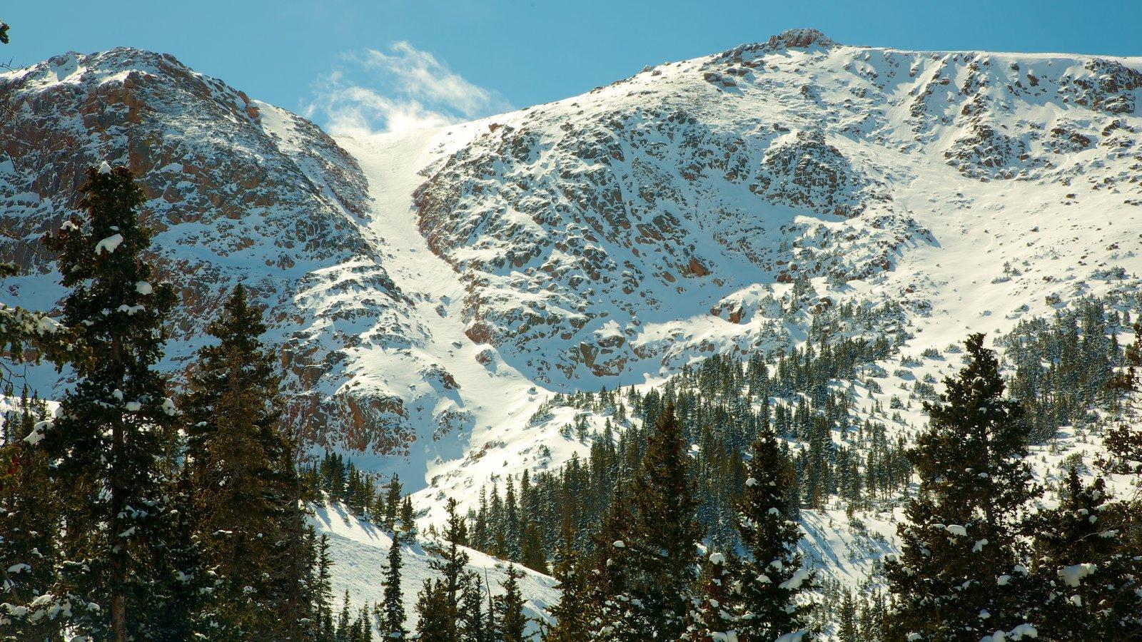 Pikes Peak que inclui cenas de floresta, montanhas e paisagem