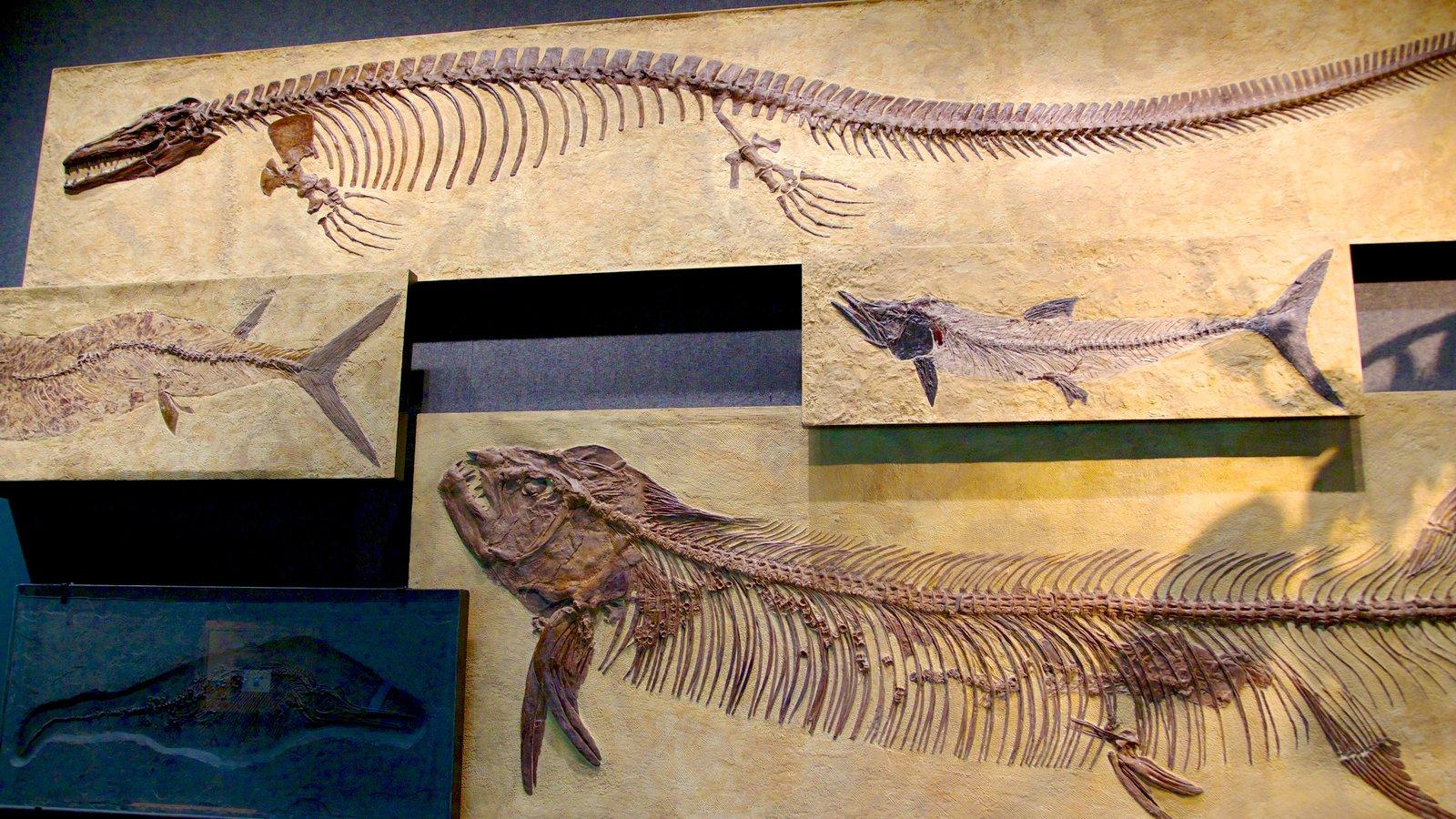 Denver Museum of Nature and Science caracterizando vistas internas