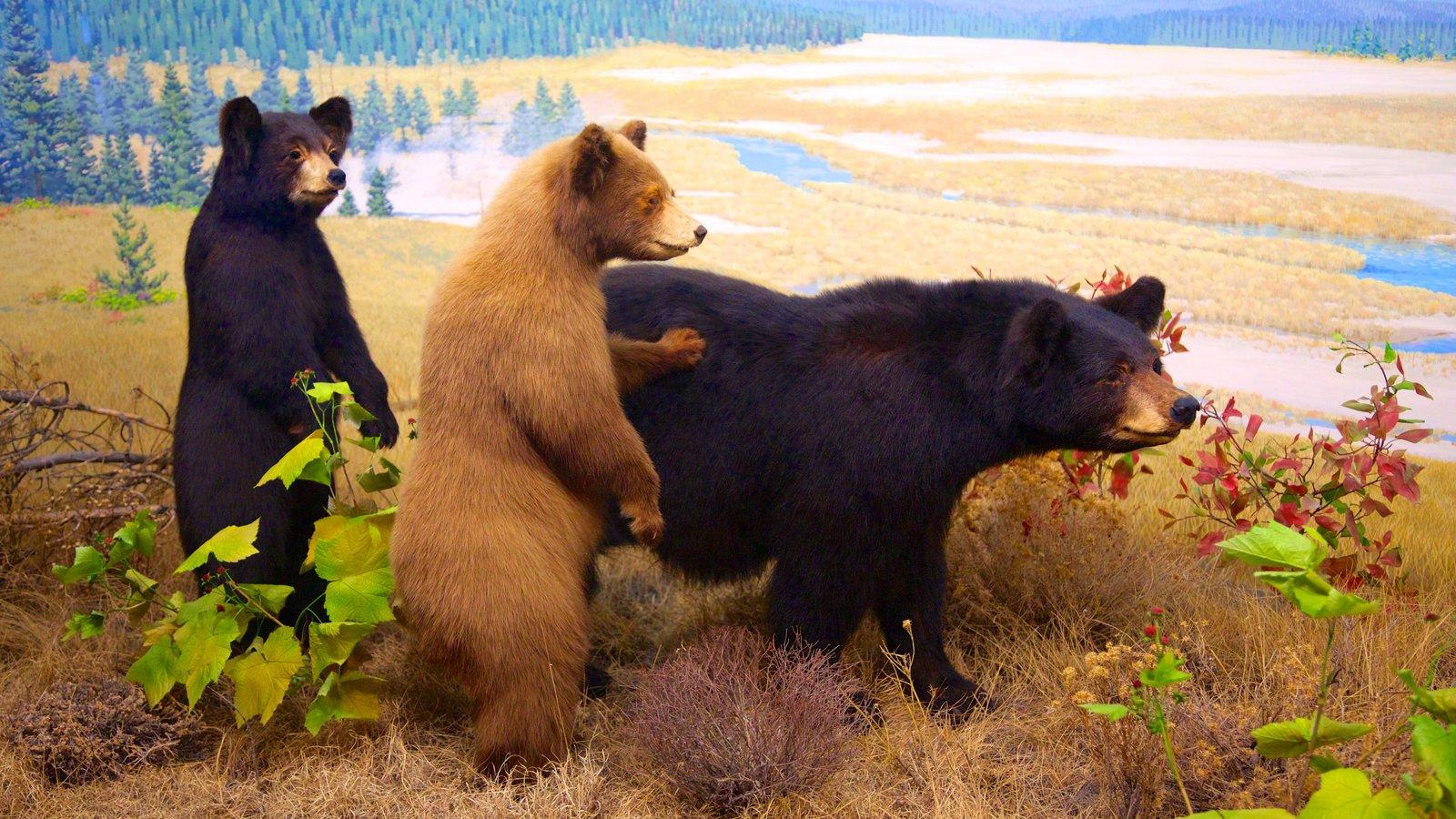 Denver Museum of Nature and Science que inclui vistas internas e animais perigosos