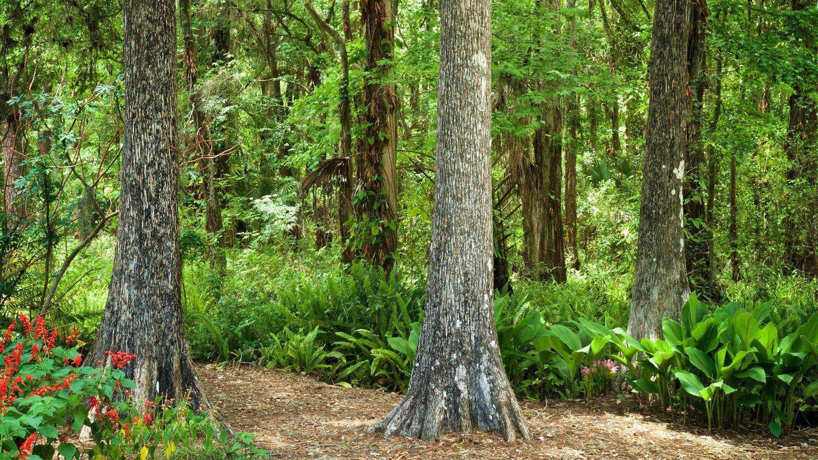 Parque regional Eureka Springs mostrando un parque