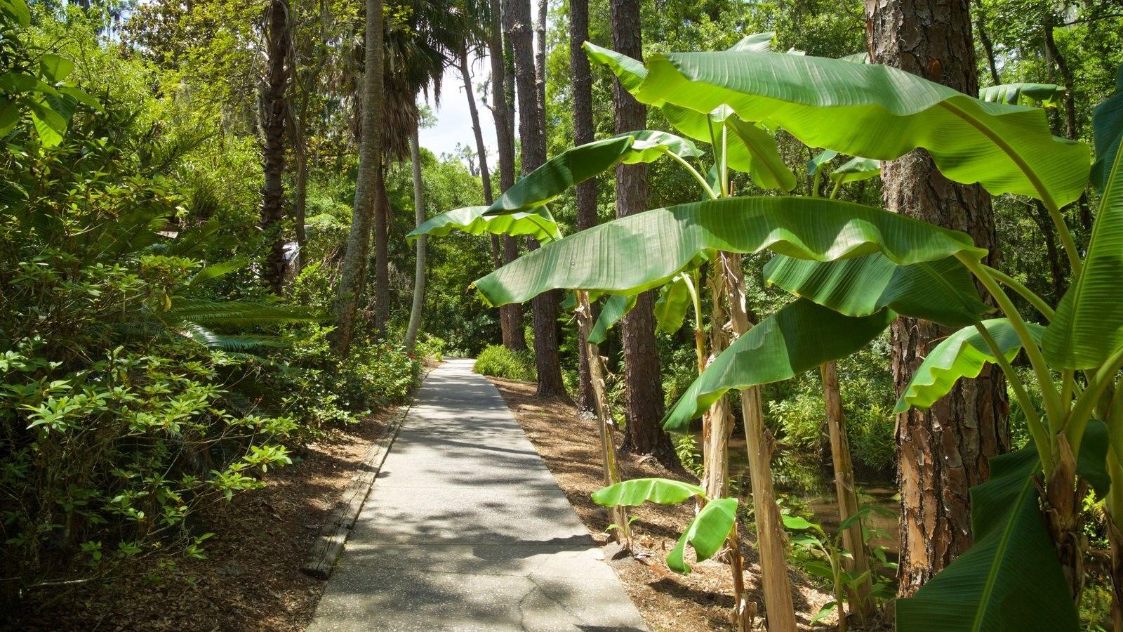 Parque regional Eureka Springs mostrando un jardín