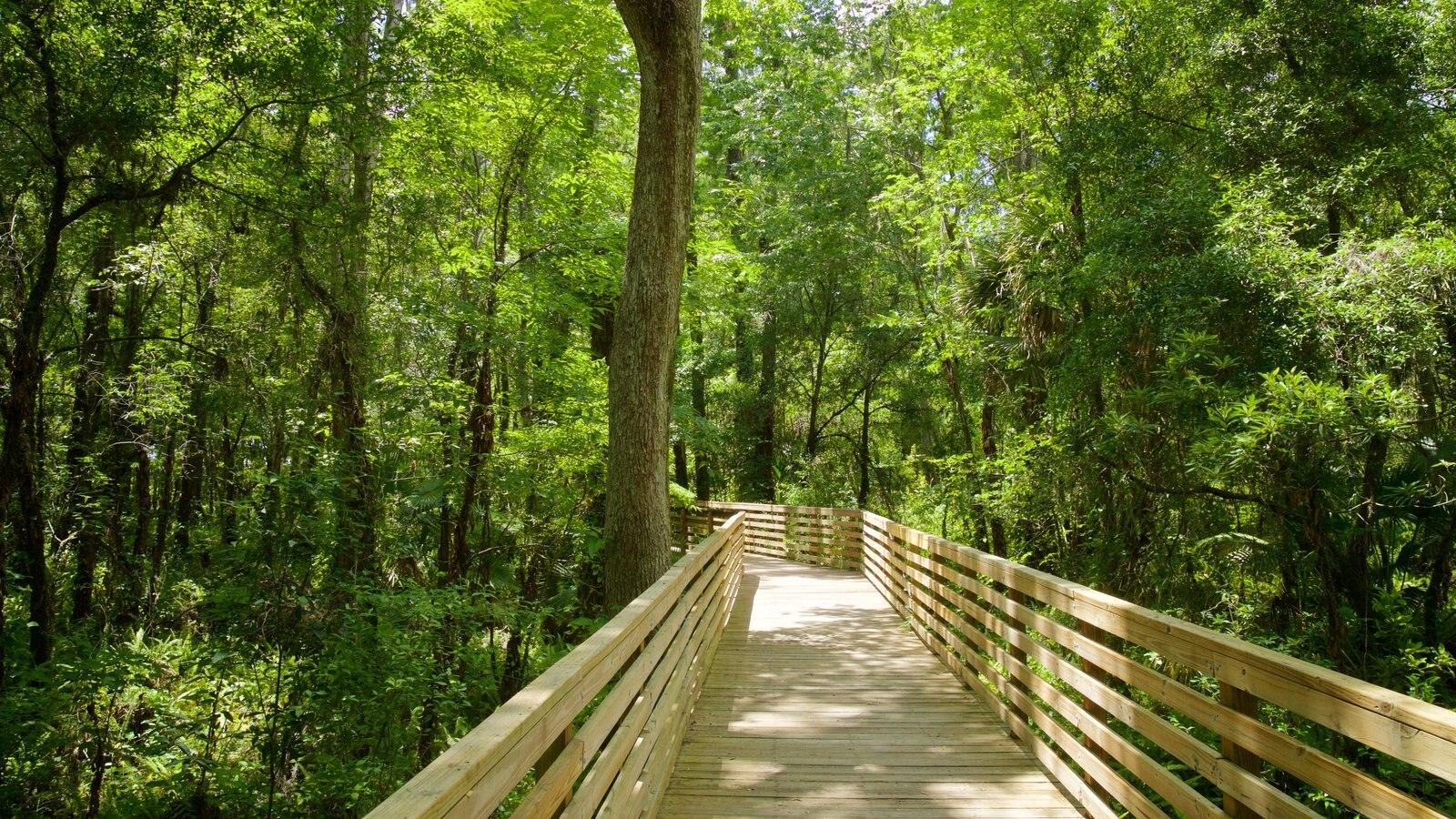 Parque regional Eureka Springs que incluye un parque y un puente