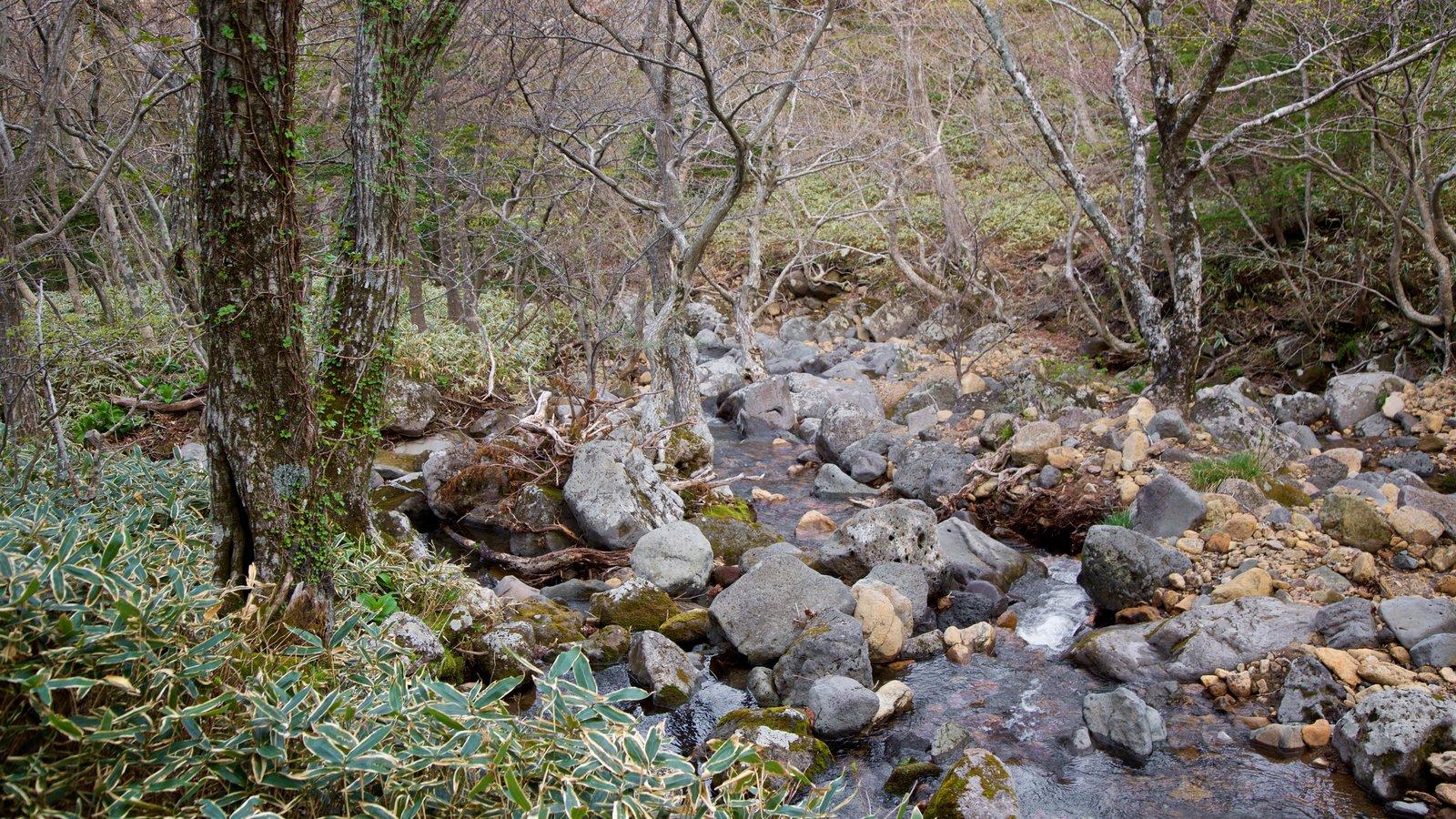 Parque Nacional de Hallasan mostrando escenas forestales