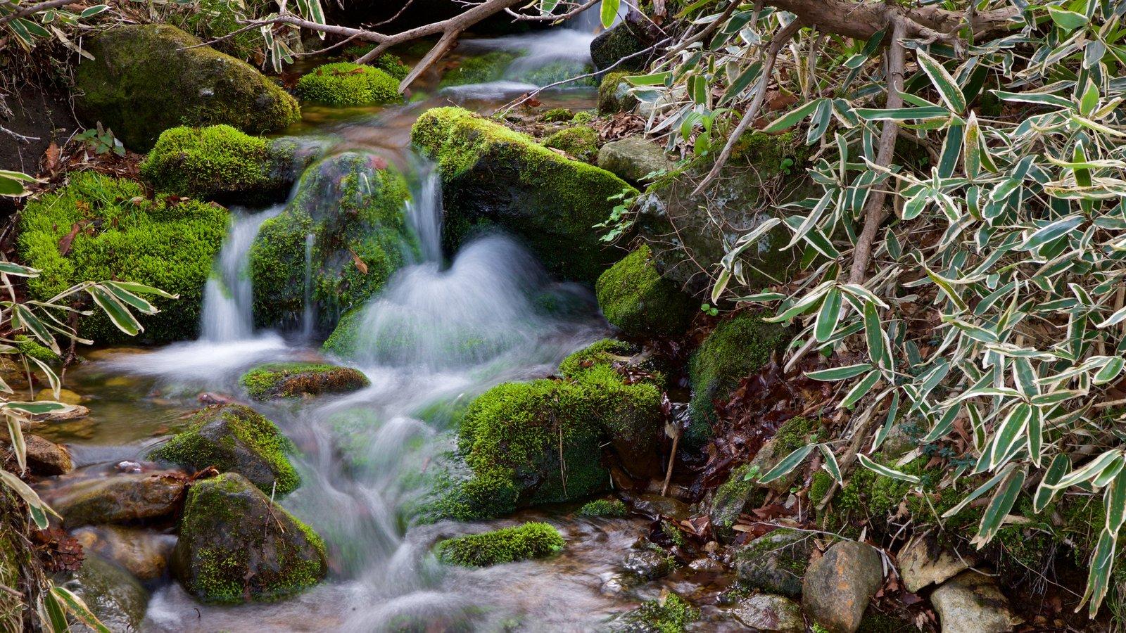 Parque Nacional de Hallasan mostrando un río o arroyo