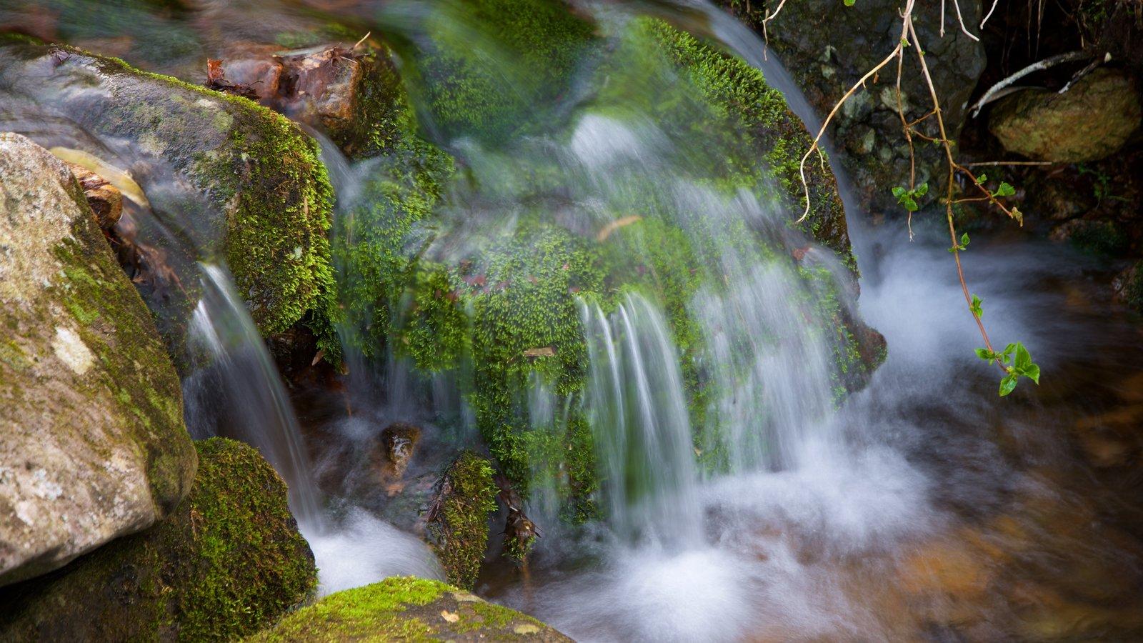 Parque Nacional de Hallasan ofreciendo un río o arroyo