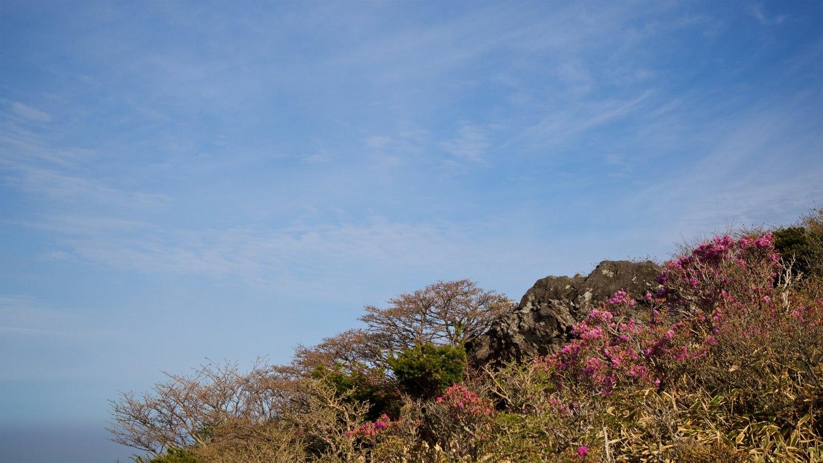 Parque Nacional de Hallasan mostrando escenas tranquilas y flores silvestres