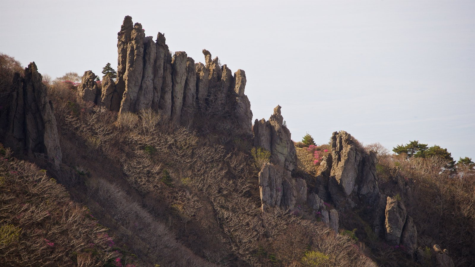 Parque Nacional de Hallasan ofreciendo escenas tranquilas