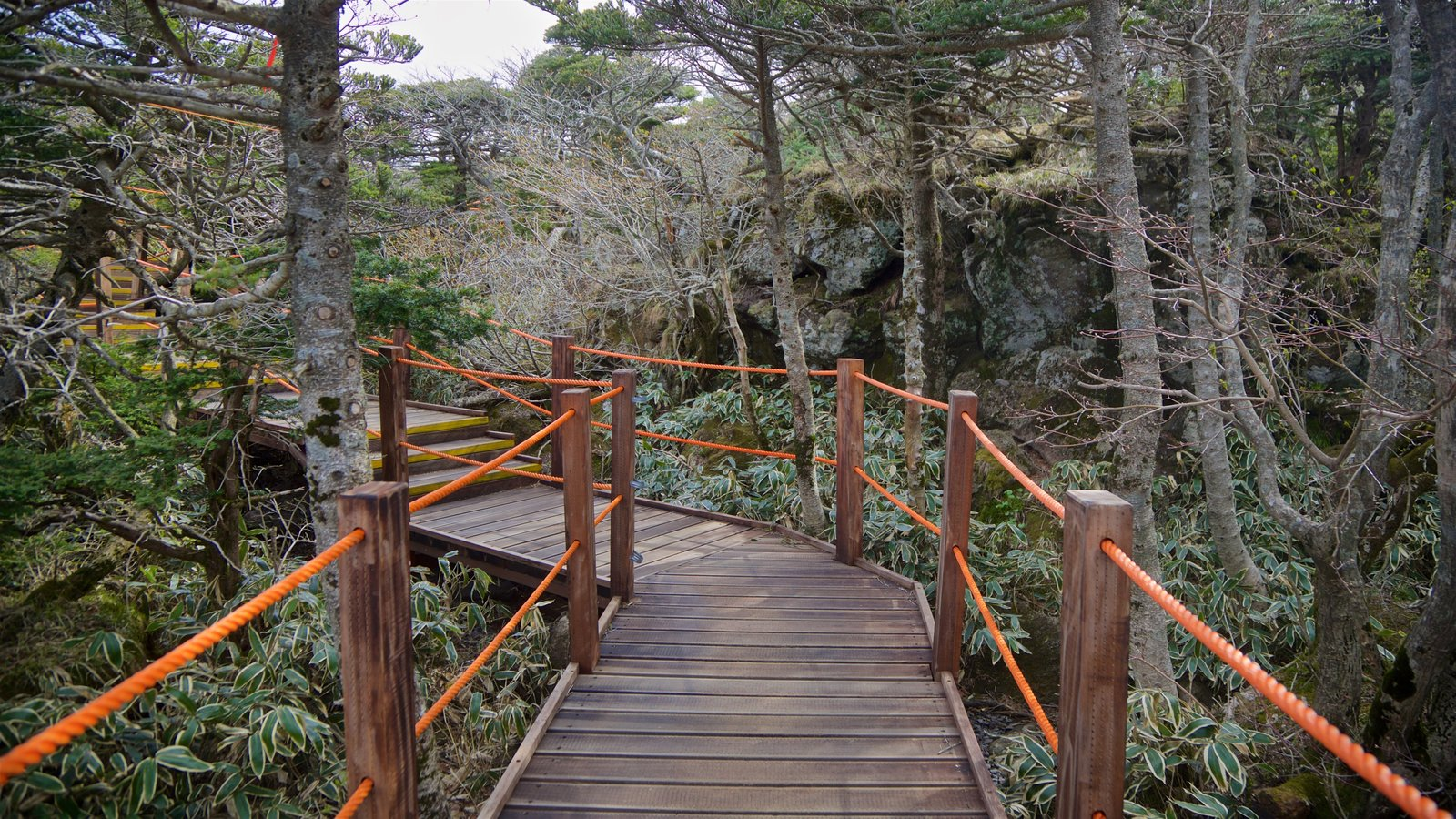 Parque Nacional de Hallasan mostrando bosques y un jardín